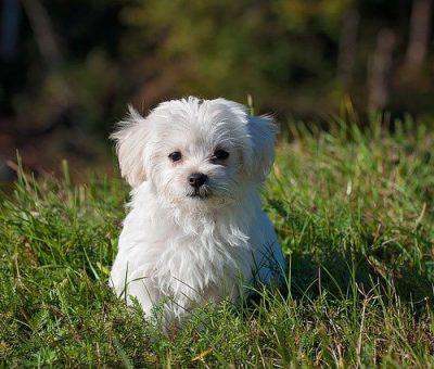 pension chien